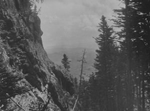 Rocky Mountain Ravine with Tall Pines by Bayard Wootten