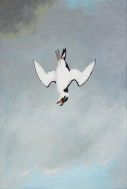Falling Razorbill by Michael Francis Reagan