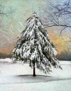 A Christmassy Snowfall by Watson  Brown