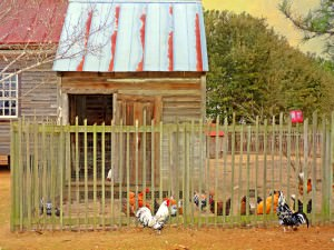 The Old Chicken Yard by Watson  Brown