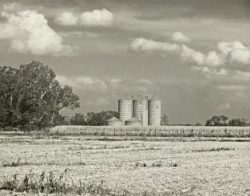 Corn Harvesting Time by Watson  Brown