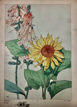 Digitale - Soleil by E.A.  Seguy (1877-1945)