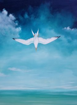 Falling Arctic Tern by Michael Francis Reagan