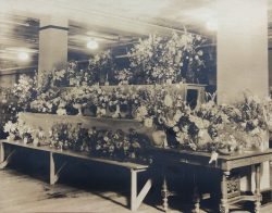 Flower Show by Bayard Wootten