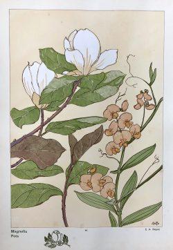 Magnolia - Pois by E.A.  Seguy (1877-1945)