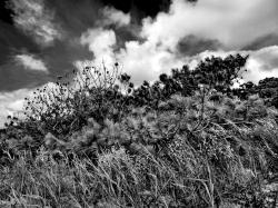 Kiawah Dunes by Sandra Mae Jensen