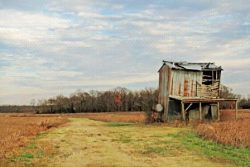 Old Barns and Beans by Watson  Brown