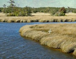 Peace in the Marshlands by Watson  Brown