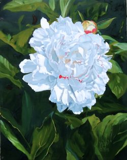 Peonies by William C. Wright
