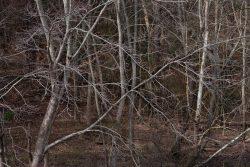 Trees at Shelly Lake by Sandra Mae Jensen