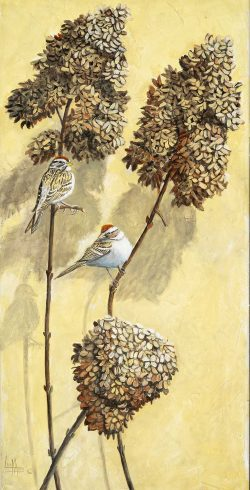 Winter Sparrows by Lee Mims