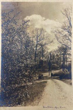 UNC - Chapel Hill, Triptych: Road by Bayard Wootten
