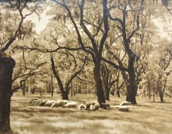 Sheep Grazing at Middleton Place by Bayard Wootten (1875-1959)