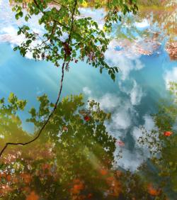 Autumn Reflection by Sandra Mae Jensen