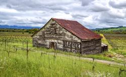 Vineyard Barn by Sandra Mae Jensen